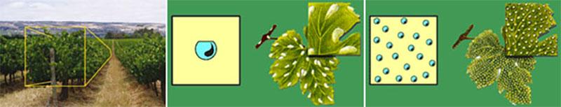 difesa-integrata-tenuta-parco-dei-monaci-azienda-agricola-vitivinicola-produzione-vino-primitivo-doc-monacello-rosapersempre-spaccasassi-matera-basilicata