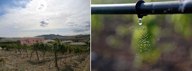 impianto-irrigazione-tenuta-parco-dei-monaci-azienda-agricola-vitivinicola-produzione-vino-primitivo-doc-monacello-rosapersempre-spaccasassi-matera-basilicata