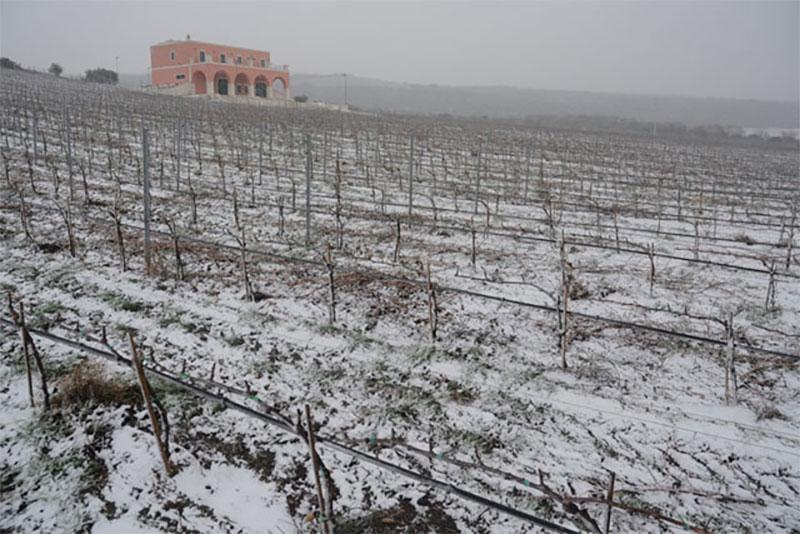 neve-tenuta-parco-dei-monaci-azienda-agricola-vitivinicola-produzione-vino-primitivo-doc-monacello-rosapersempre-spaccasassi-matera-basilicata