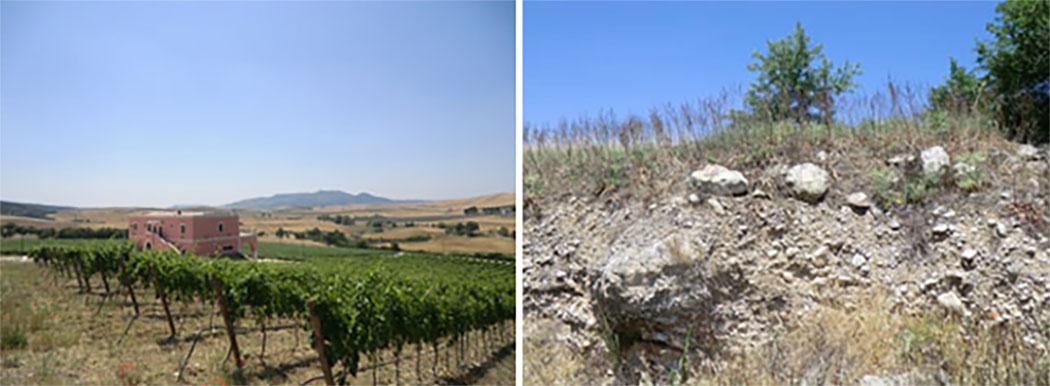 terrazzamento-sezione-suolo-tenuta-parco-dei-monaci-azienda-agricola-vitivinicola-produzione-vino-primitivo-doc-monacello-rosapersempre-spaccasassi-matera-basilicata