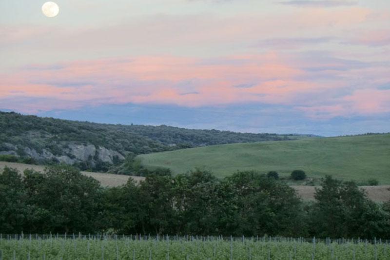 vigneto-3-tenuta-parco-dei-monaci-azienda-agricola-vitivinicola-produzione-vino-primitivo-doc-monacello-rosapersempre-spaccasassi-matera-basilicata