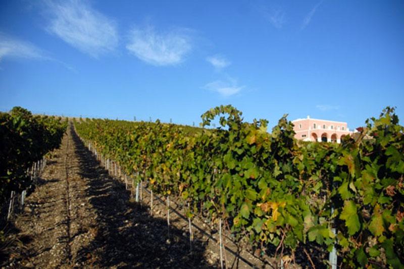 vigneto-tenuta-parco-dei-monaci-azienda-agricola-vitivinicola-produzione-vino-primitivo-doc-monacello-rosapersempre-spaccasassi-matera-basilicata